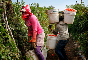 Take action now to let large corporations know farmworkers matter!