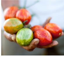 Read the Farmworkers Fact Sheet