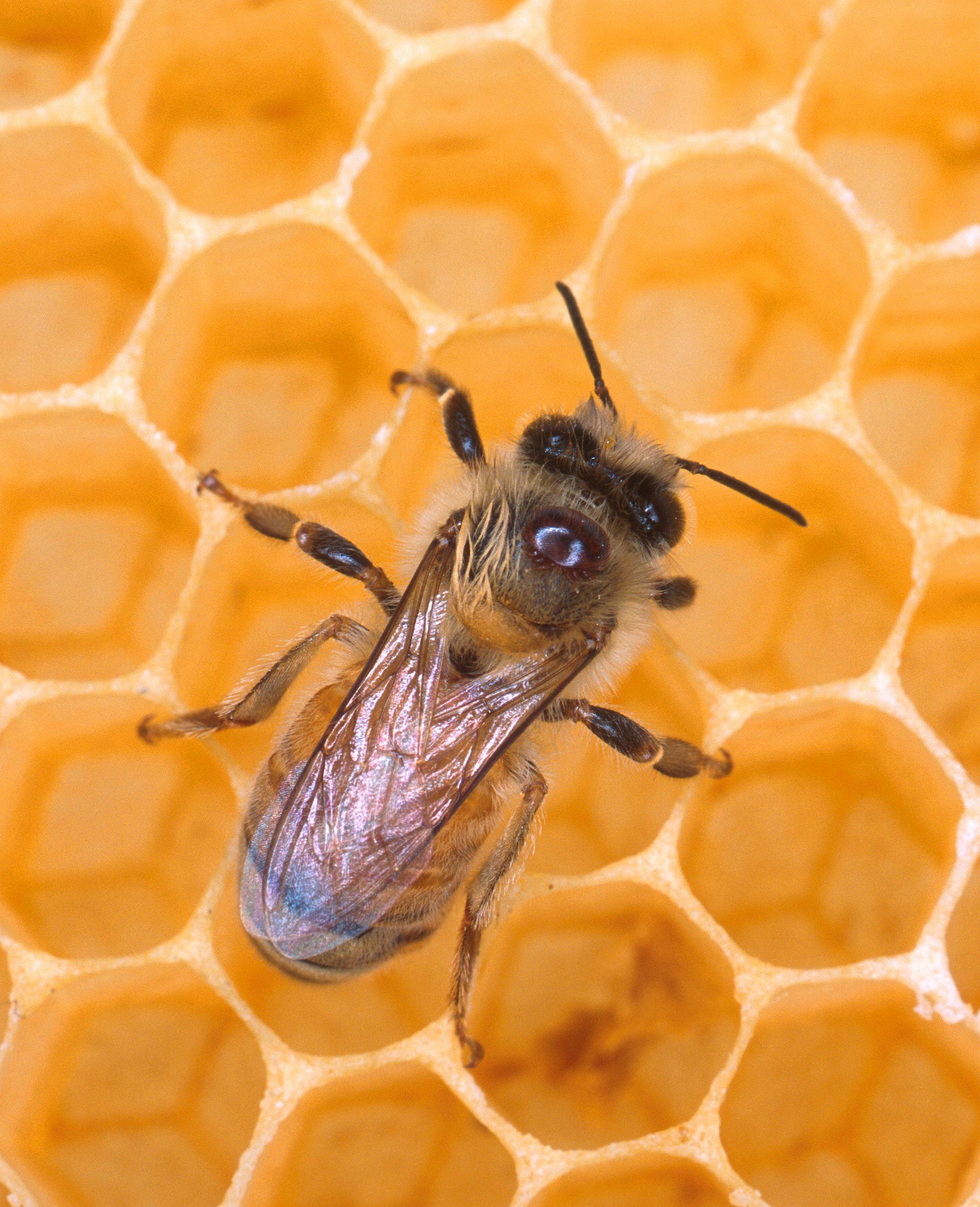 Bees Are Still Dying