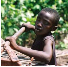 Cocoa Farmer using Child Labor - Credit: ILRF