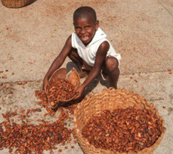 Two Million Child Cocoa Workers